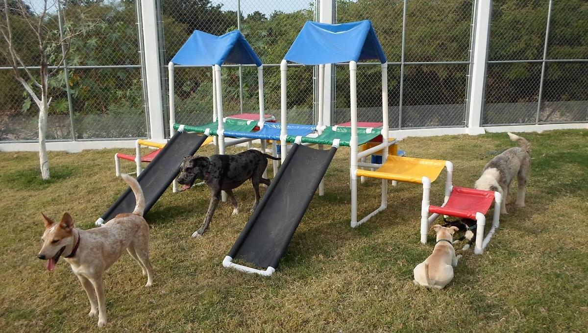Imagen de un parque canino