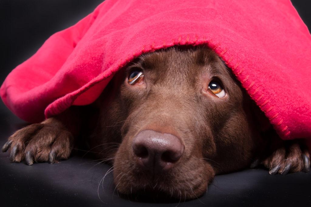 Imagen de internet de un perro asustado